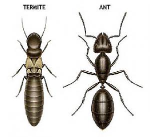 Termites Prevention And Treatment Richmond Sugar Land