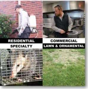 Pest Control Services | Residential, Commercial, Lawn, Rodent, Termite