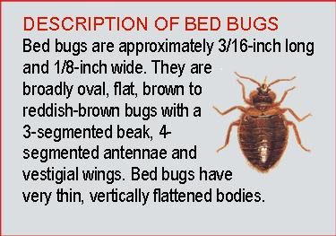 Description of Bed bugs