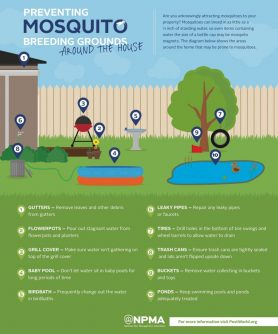 Mosquito Breeding sites